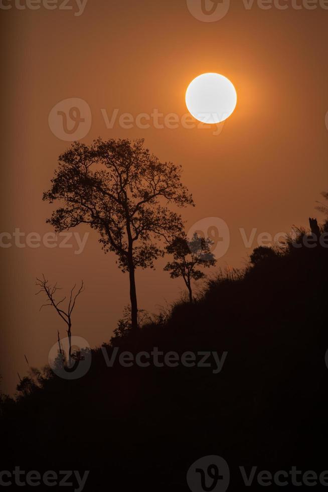 oranje zonsopgang en bomen foto