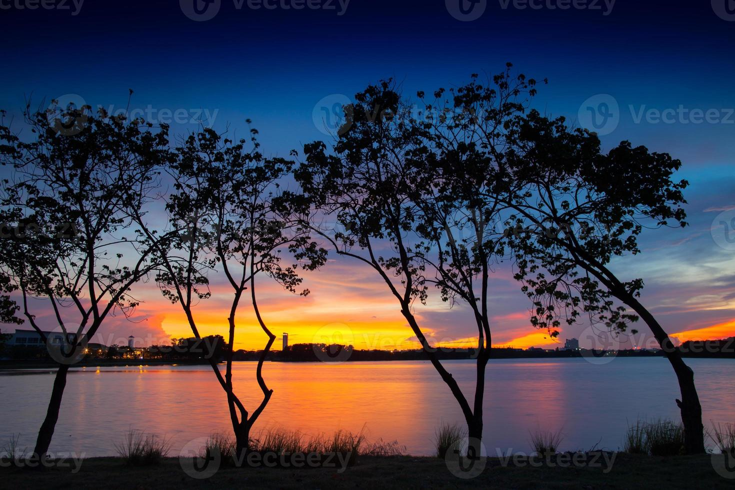 boom silhouetten bij zonsondergang foto