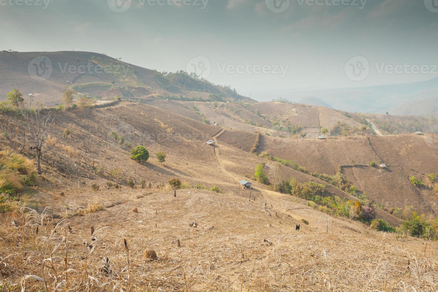 velden op een berghelling foto
