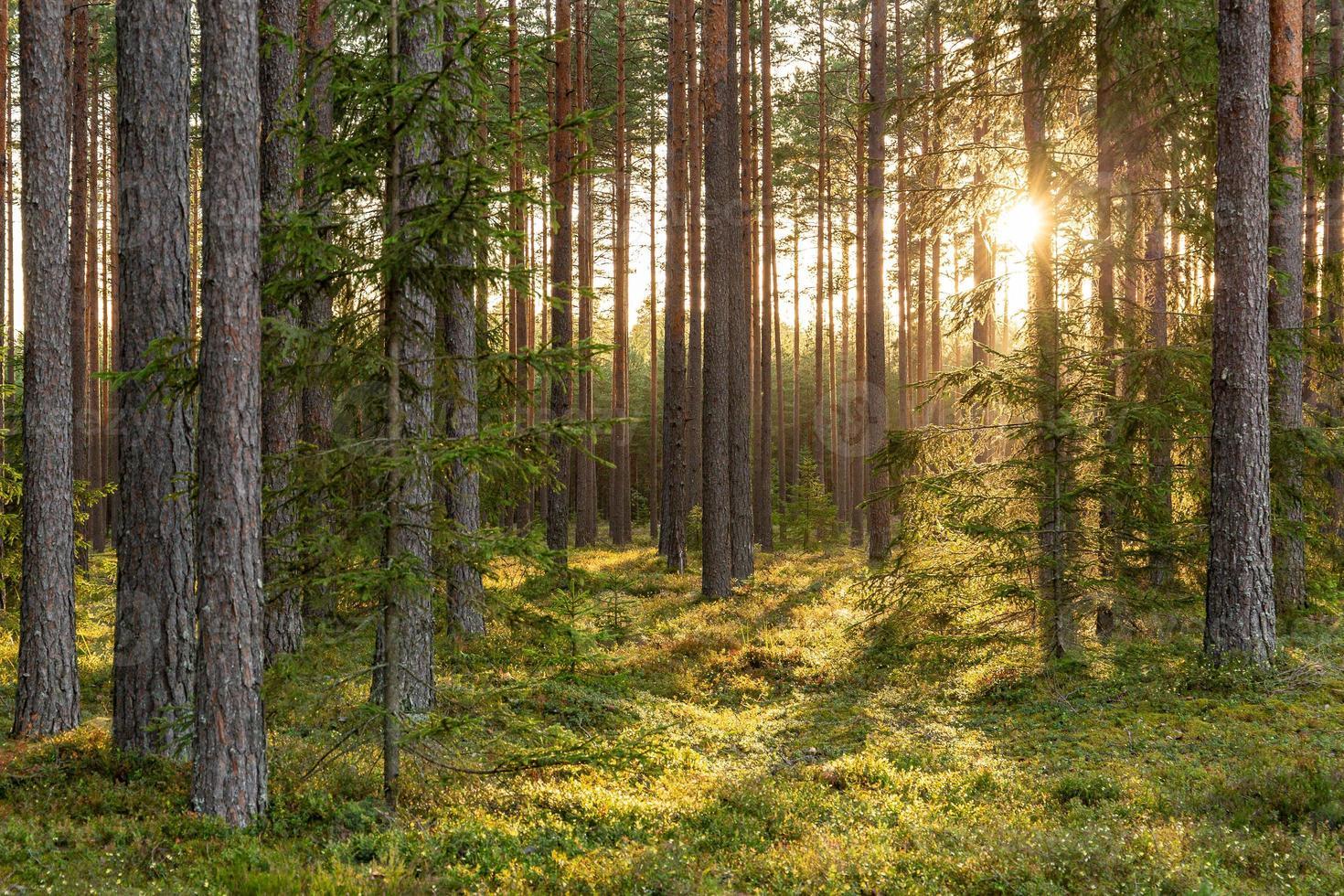 bosscène met bemoste grond in Letland foto