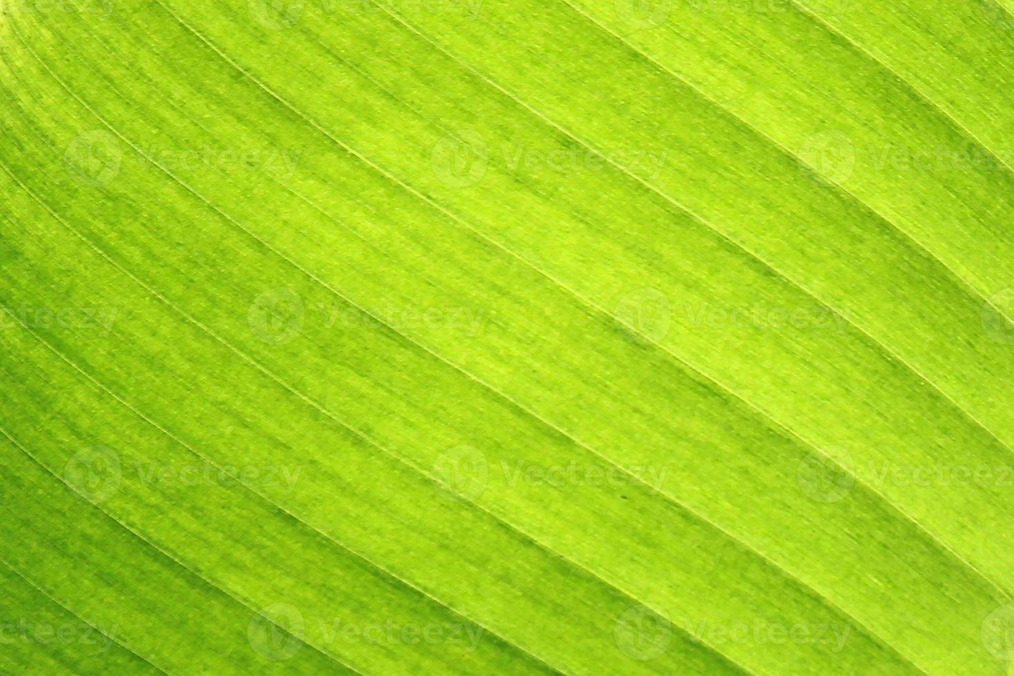 close-up van bananenblad foto