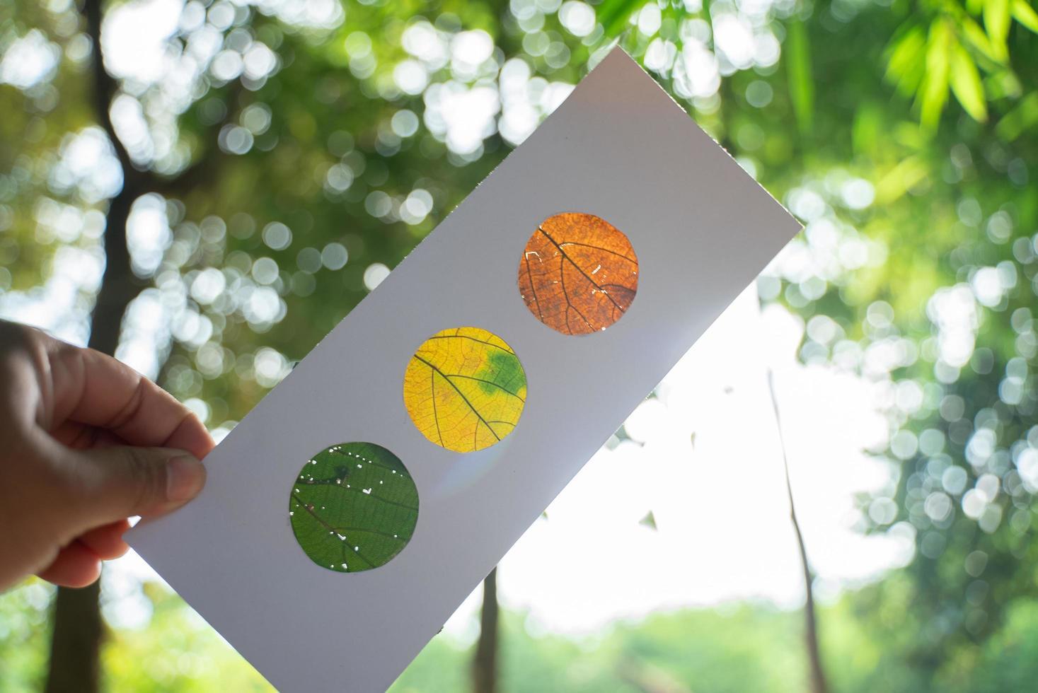oranje, gele en groene bladeren in papier, die doet denken aan een stoplicht, verlicht met bosachtergrond foto