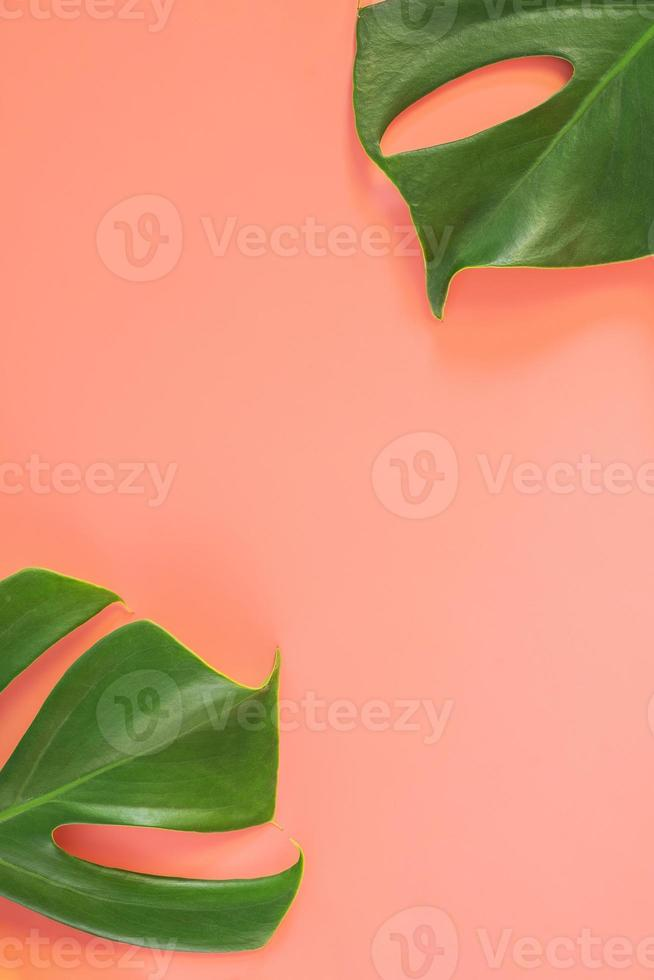 monstera bladeren op roze achtergrond foto