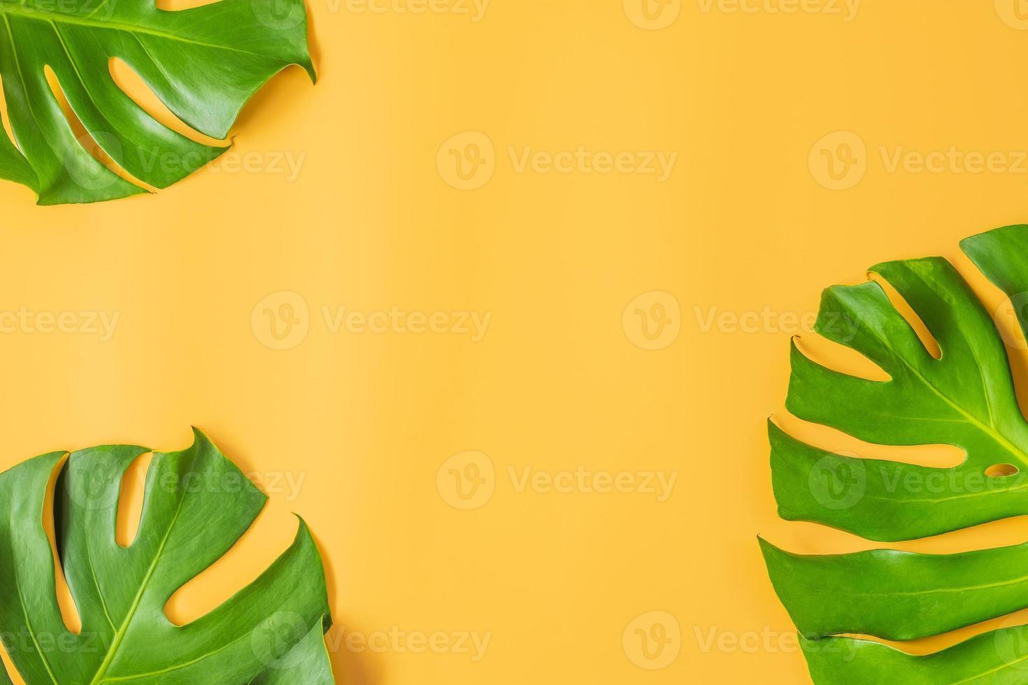 monstera doorbladert op oranje achtergrond foto