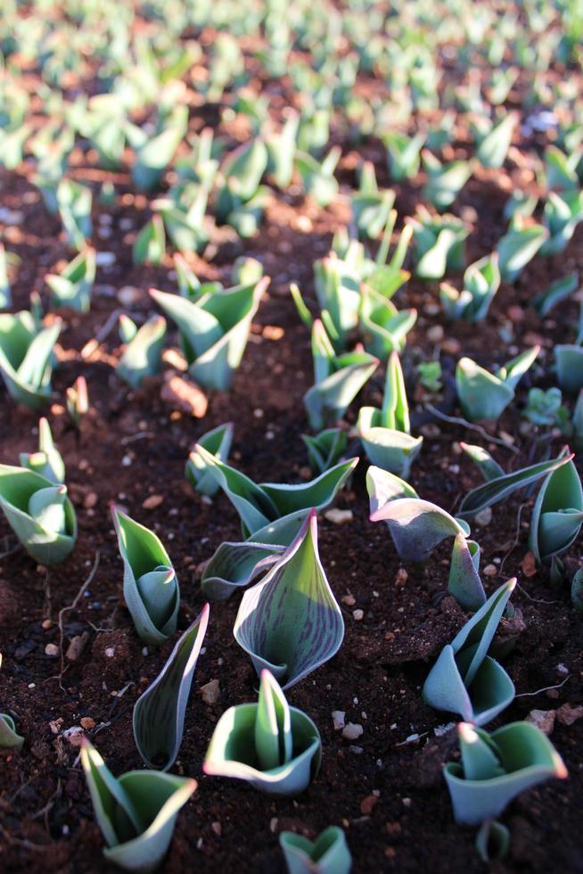 plantenspruiten en jonge planten met macrodetails foto