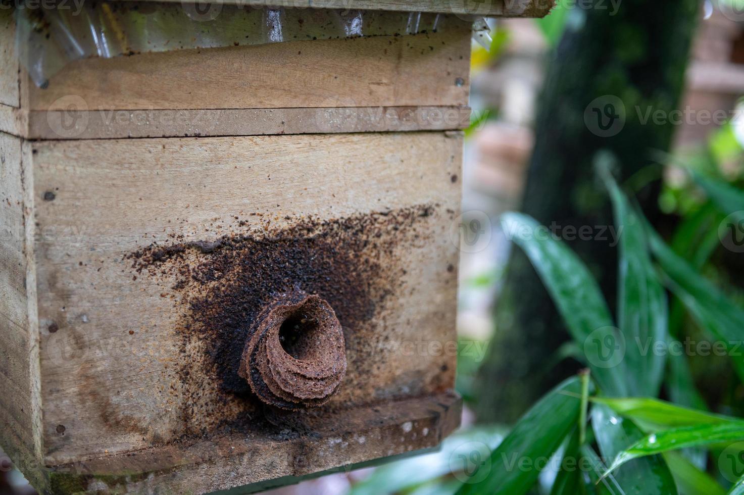houten kist voor de bijenteelt foto