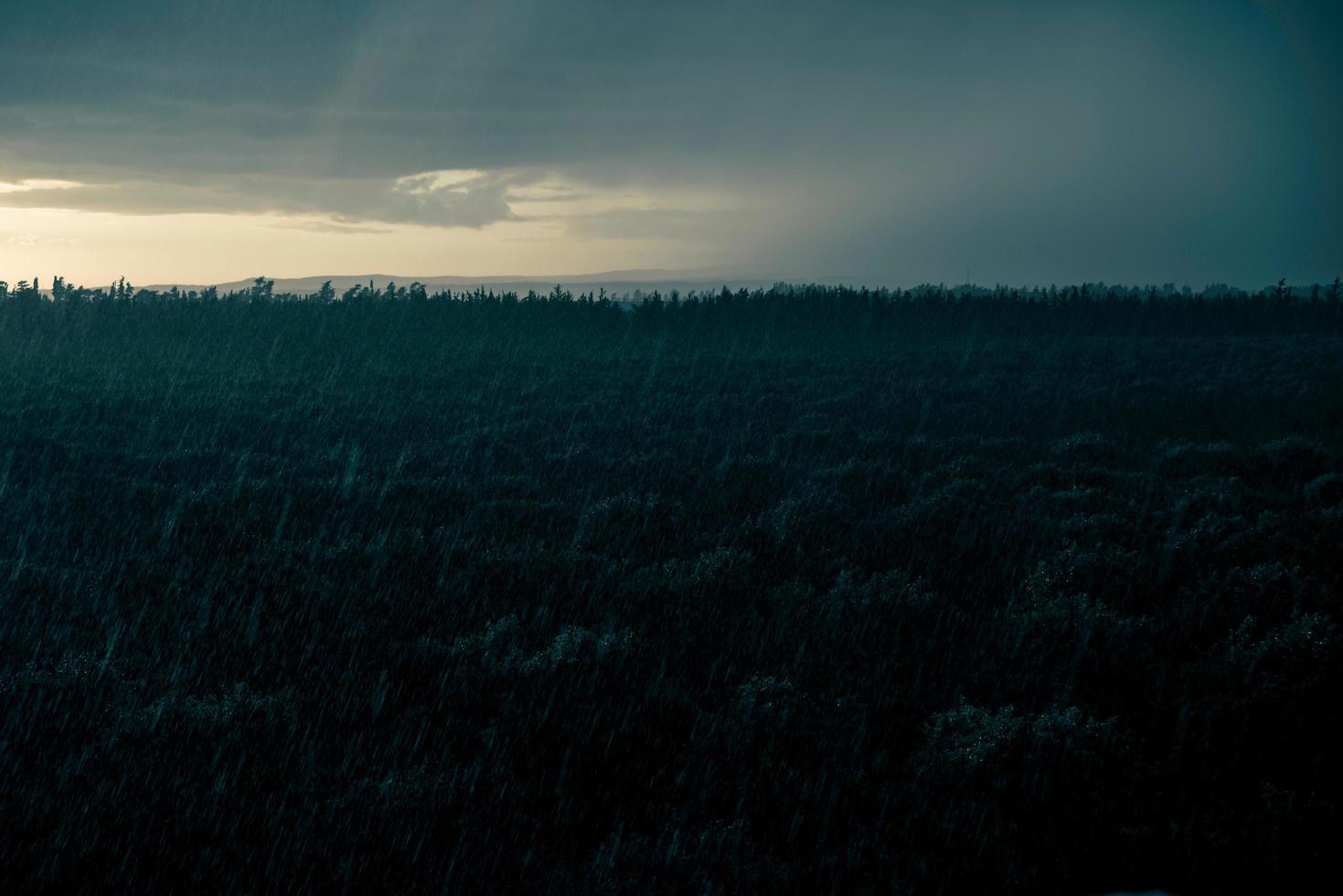 nachtregen over de boomgaard foto