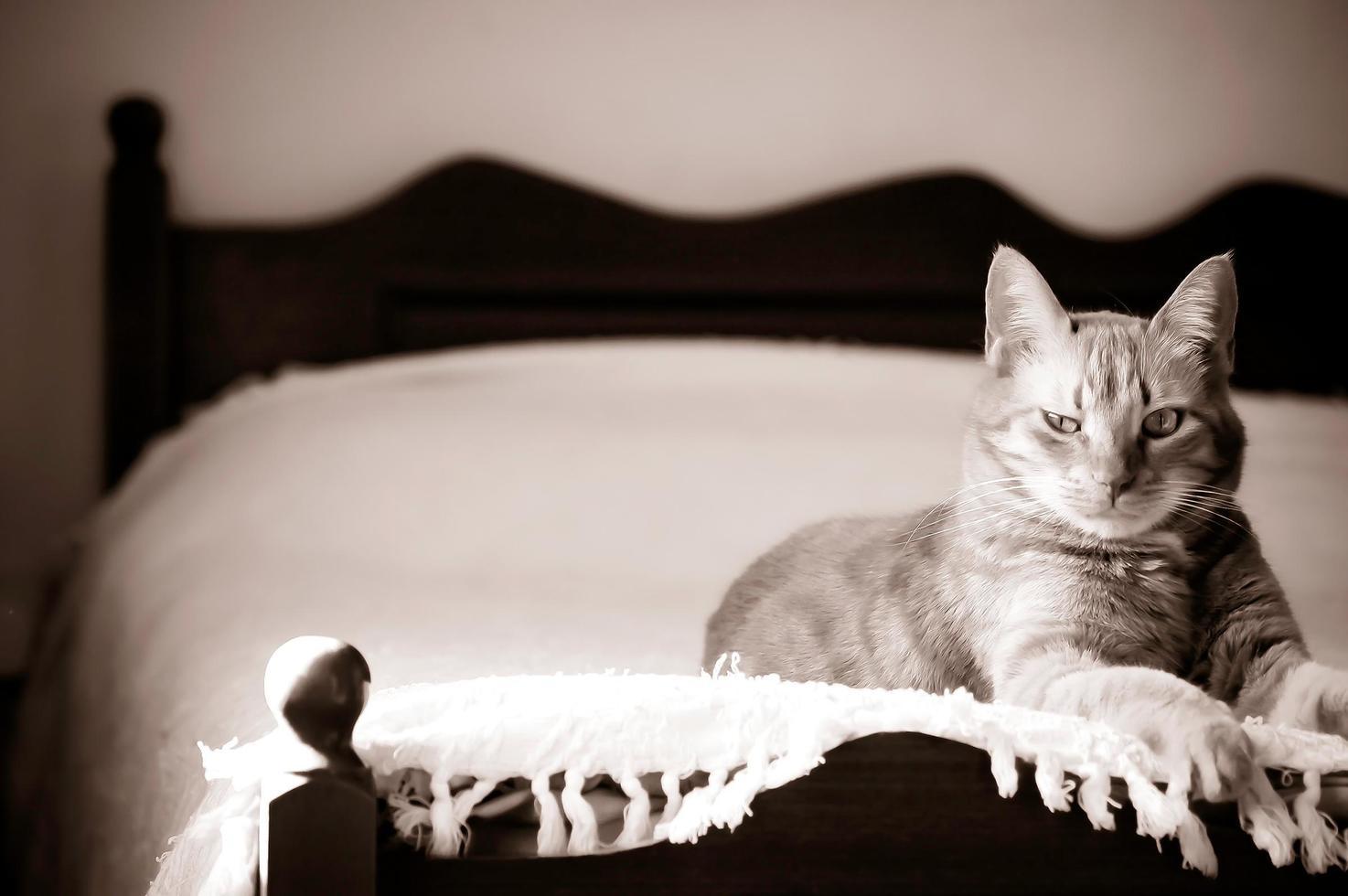 verdacht uitziende kat foto