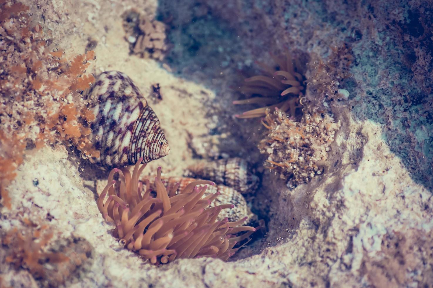 koralen en rivierkreeften foto