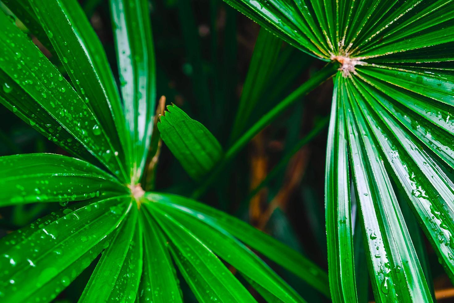 close-up van groene palmbladeren foto