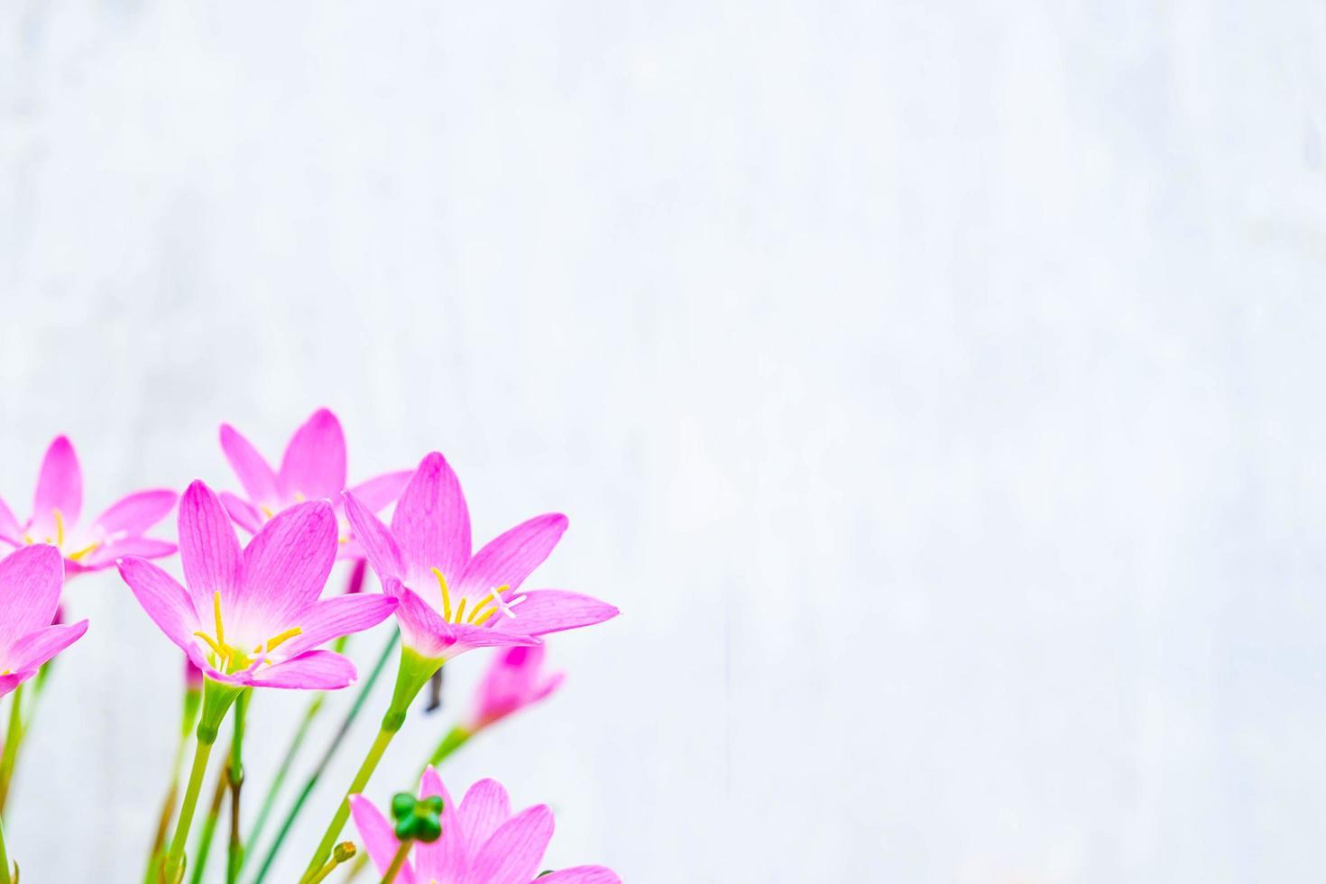 roze en paarse bloemen naast een blauwe muur foto
