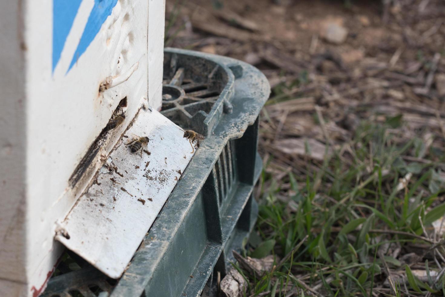 bijen vliegen in een bijenkorf foto