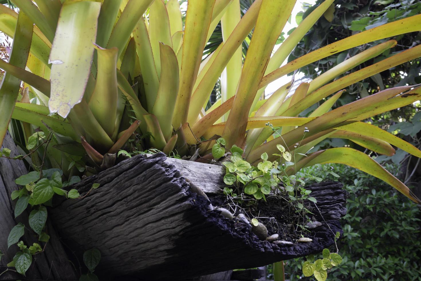 sierplanten in de tuin foto