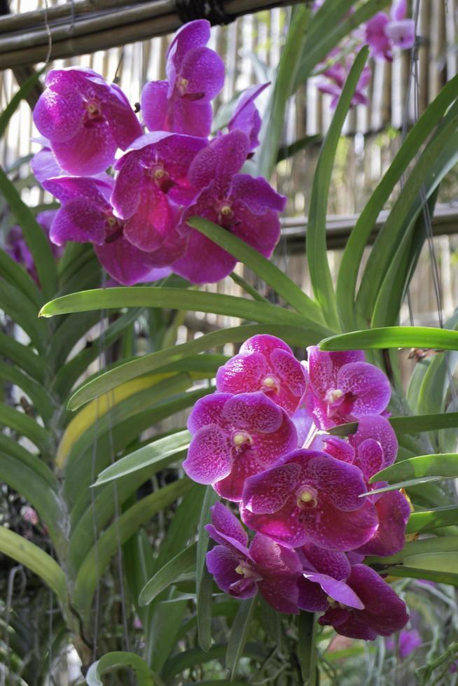paarse orchideebloem foto