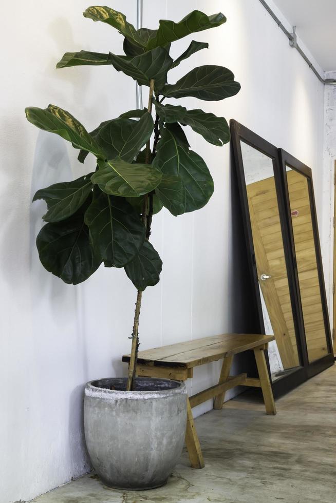 interieur groene plant foto