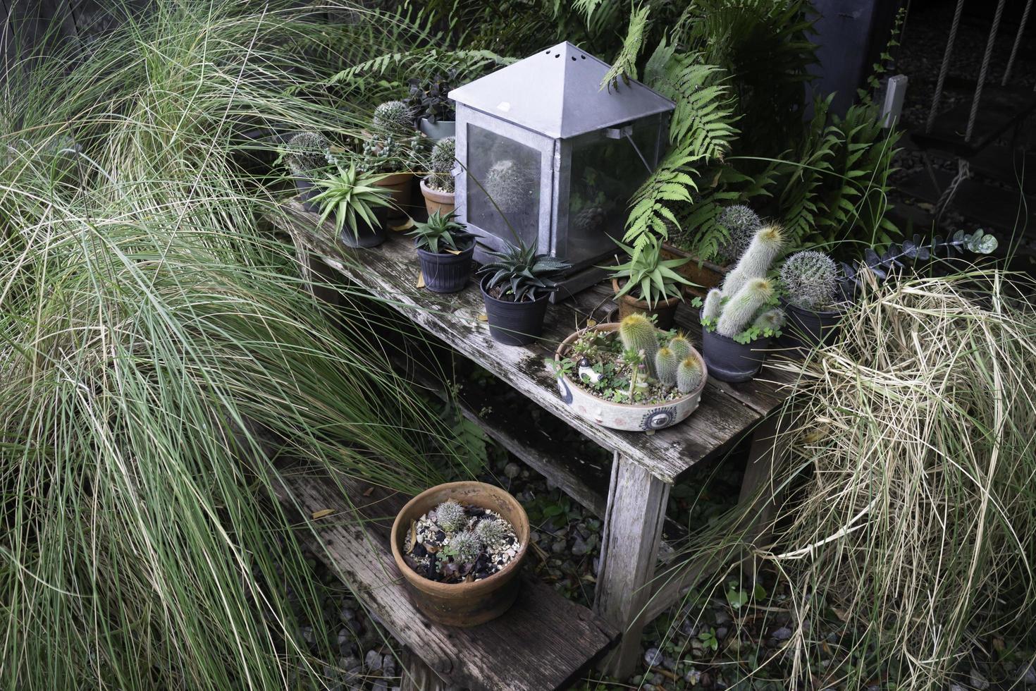 groene planten in de tuin foto