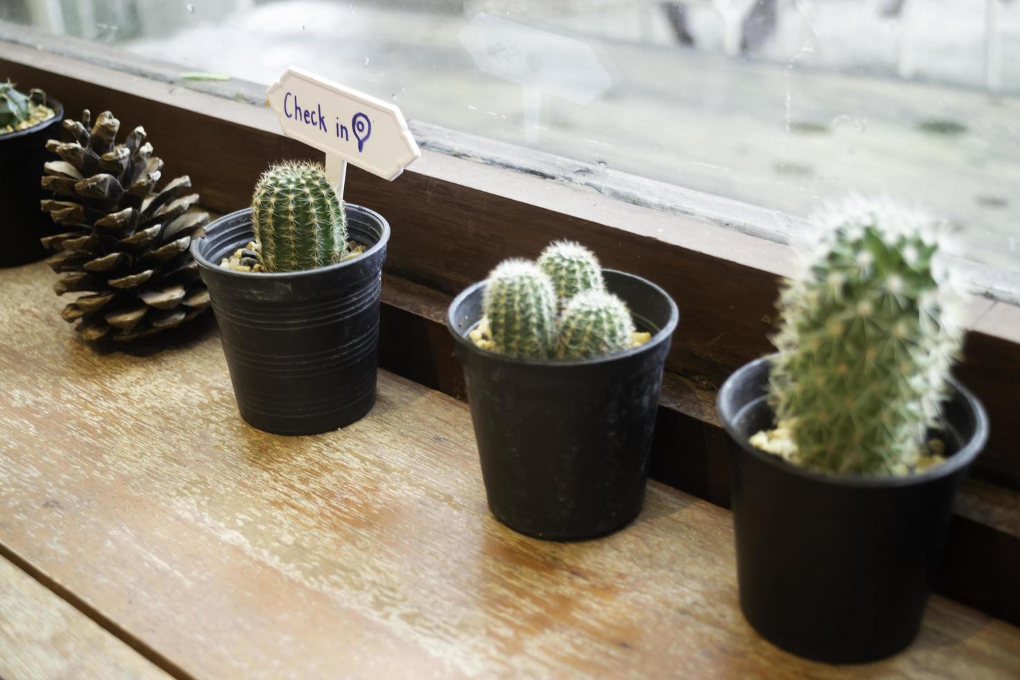 verschillende vetplanten en kamerplanten foto