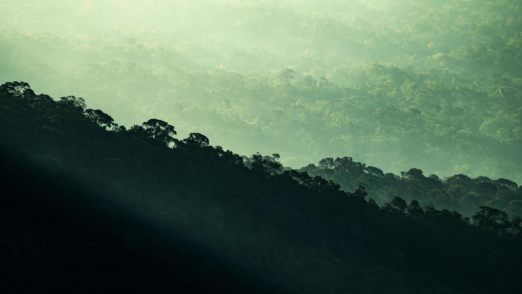 tropisch woud bergen foto