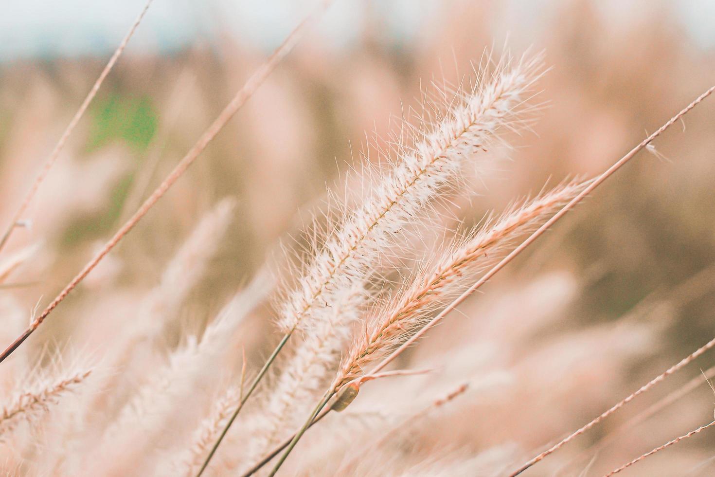 wild gras bloemen veld met vintage toon foto