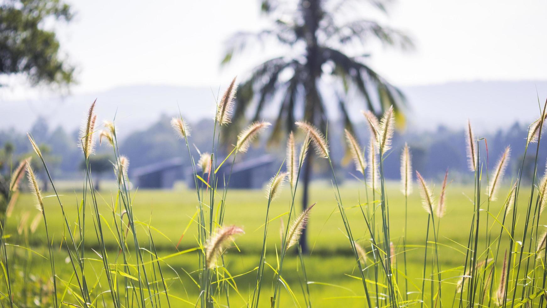 wild gras close-up met oogst gele veld achtergrond foto