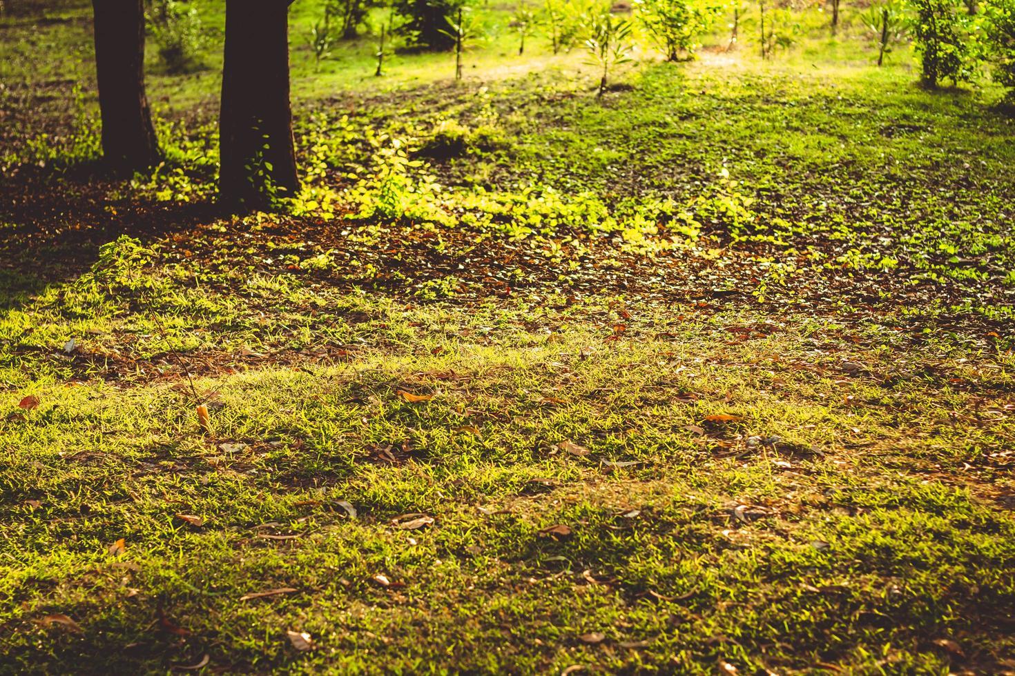 een herfst achtergrond foto
