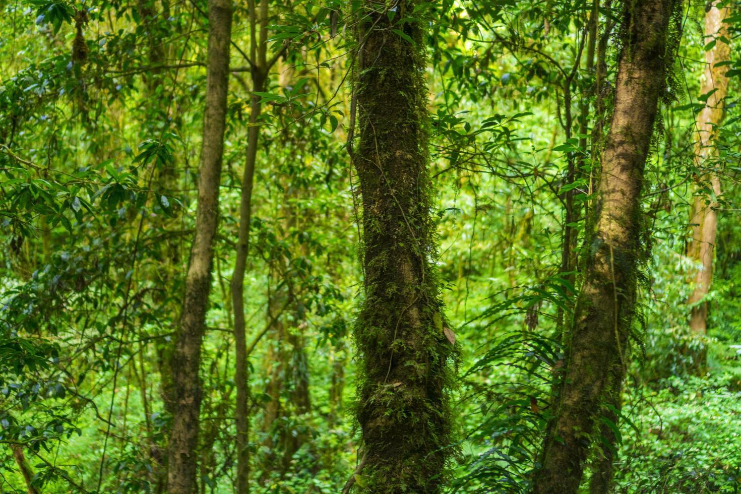 schilderachtig groen bos foto