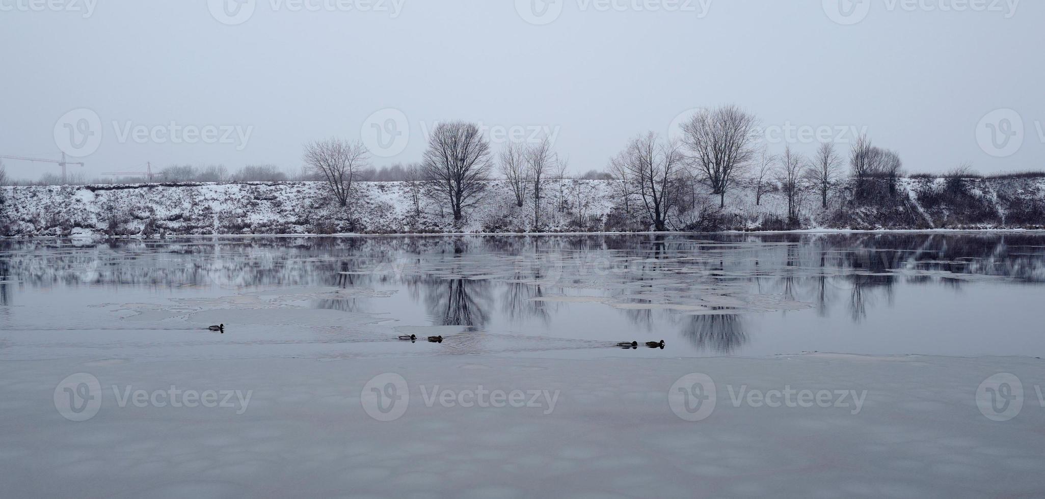 eenden zwemmen in het open water in Moskou foto