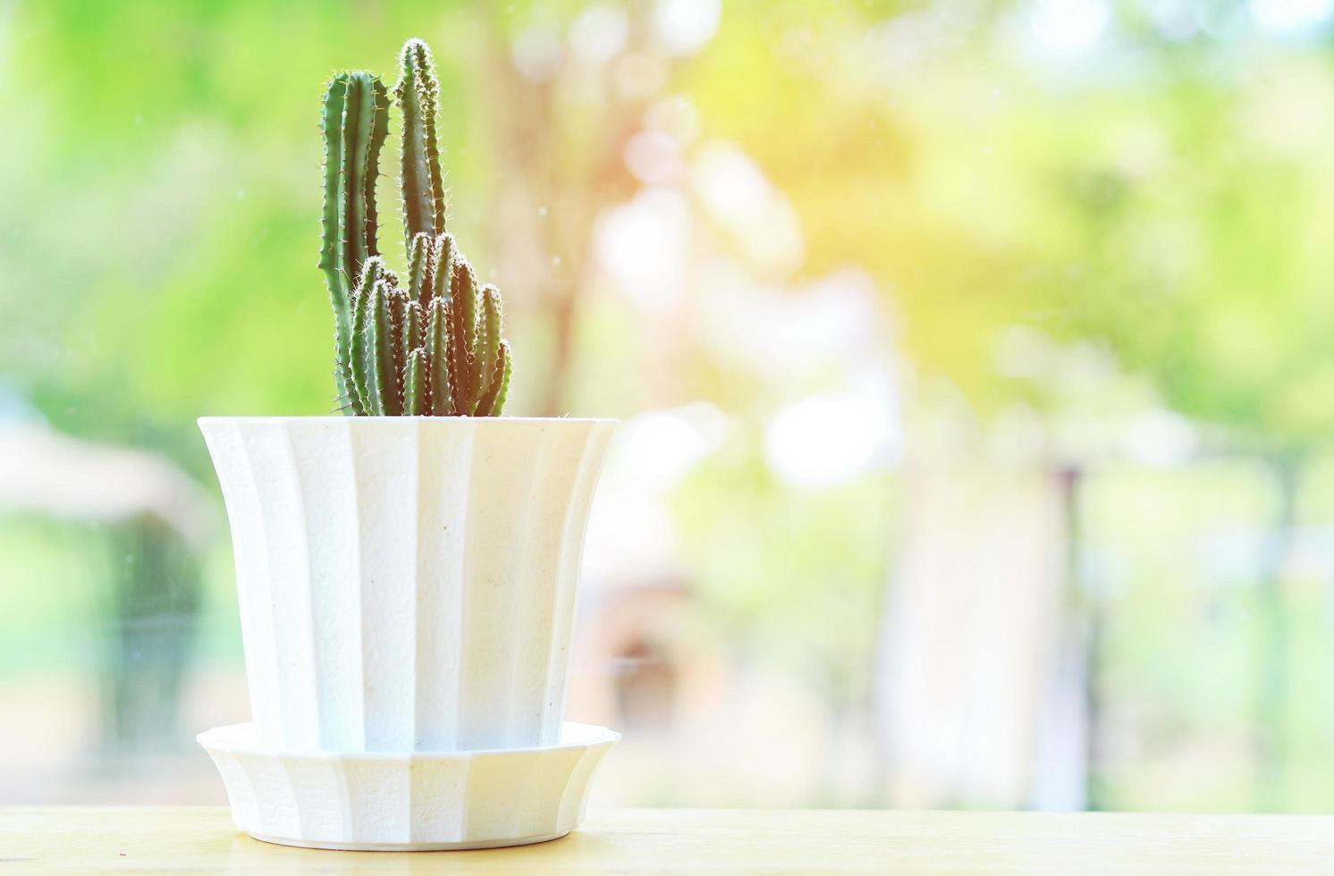 cactus in een witte pot foto