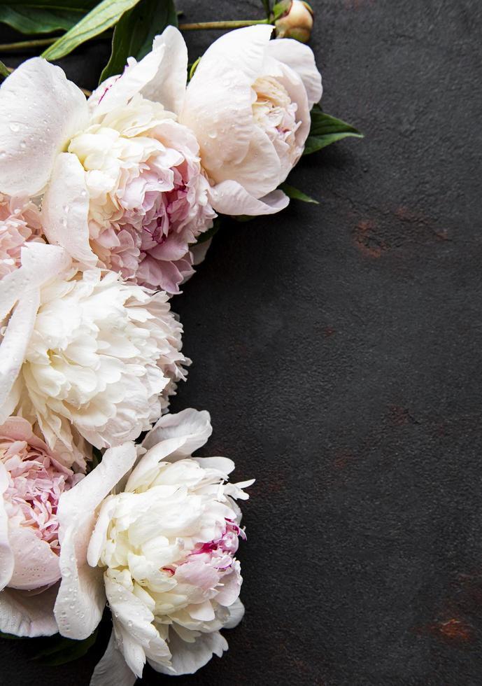 peony bloemen op een zwarte betonnen achtergrond foto