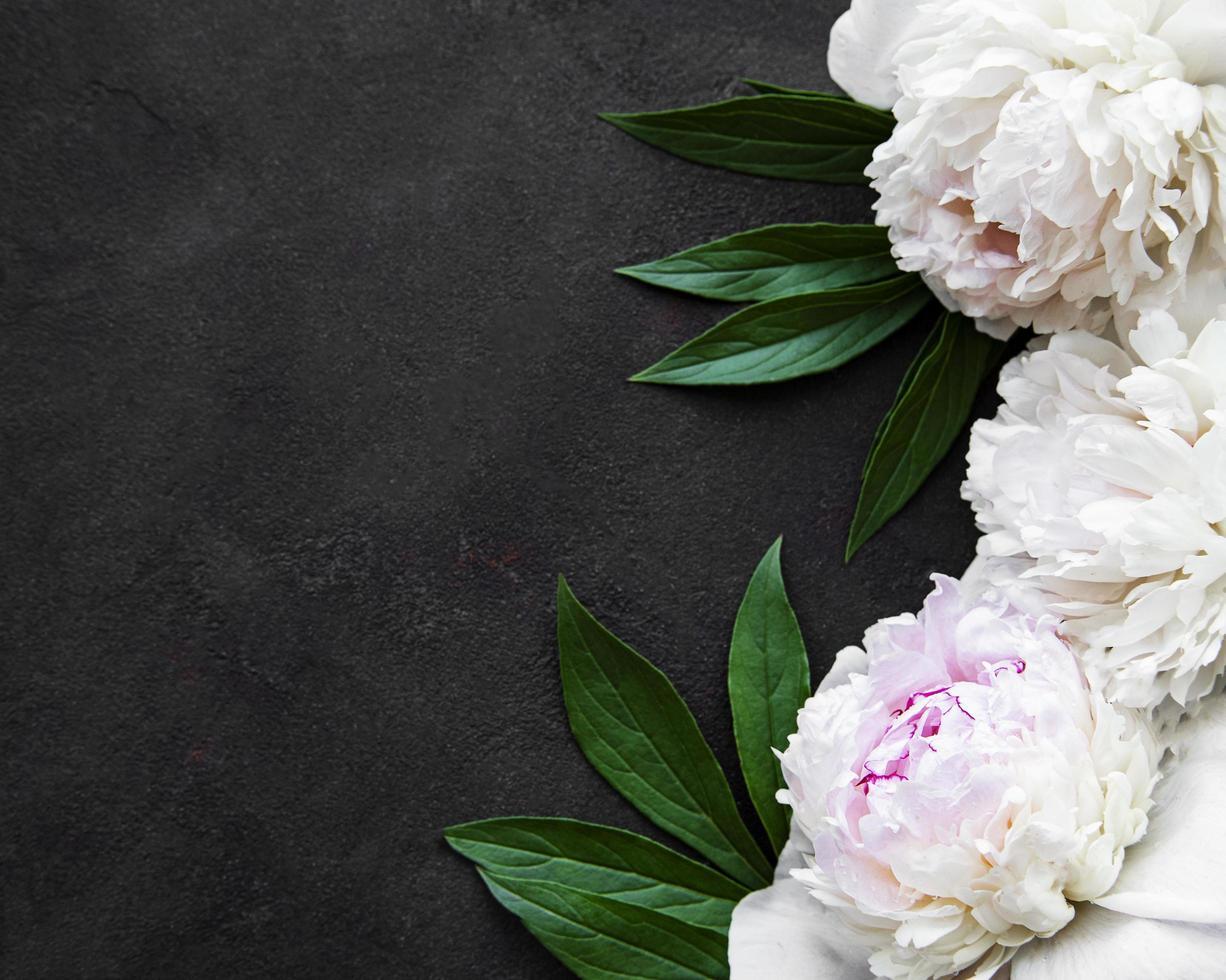 peony bloemen op een zwarte achtergrond foto