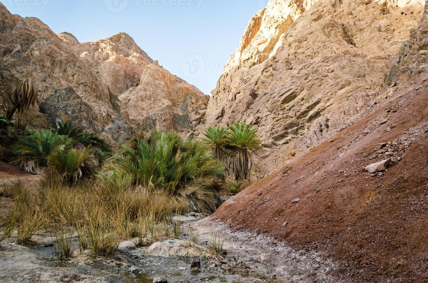 palmbomen en bergen foto