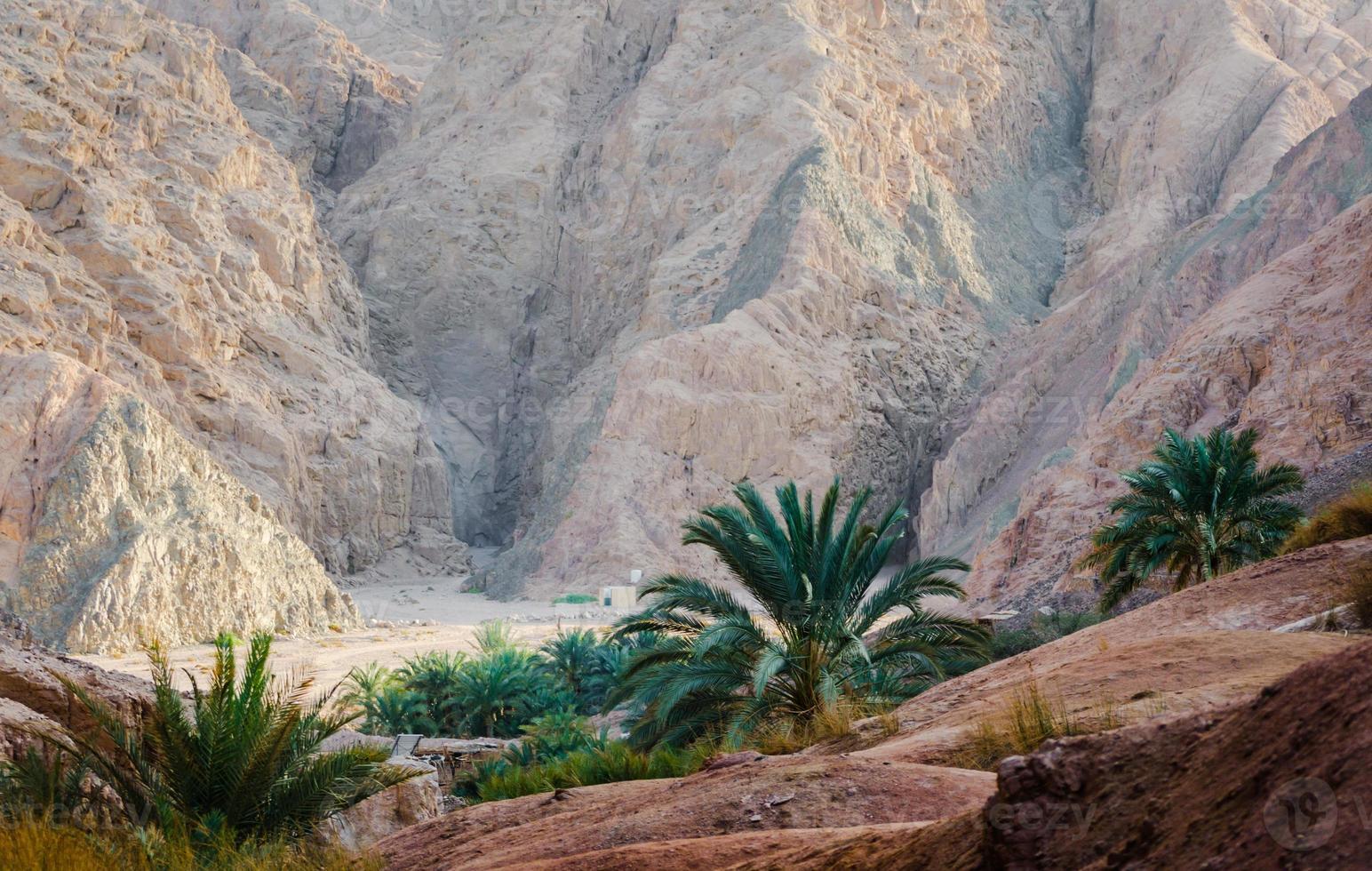palmbomen en rotsachtige bergen foto