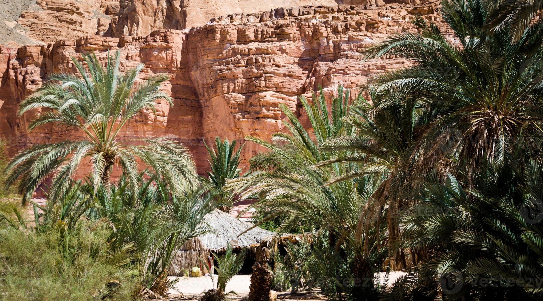 bedoeïenen in de woestijn tussen planten foto