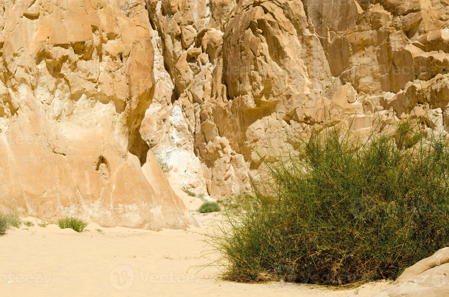 groene vegetatie groeit in een woestijn foto