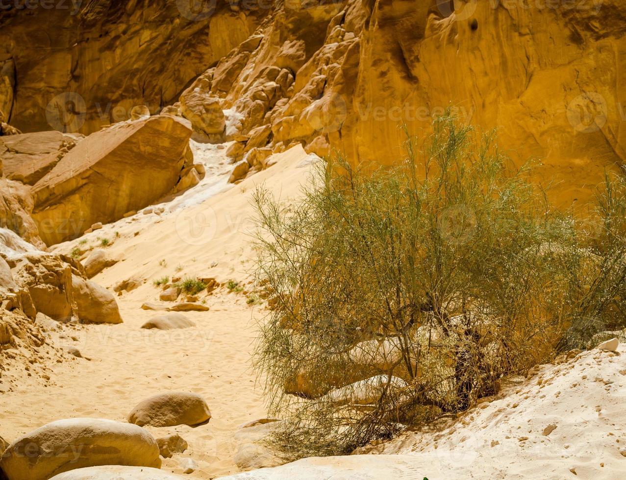 groene struik in het zand van een canyon foto