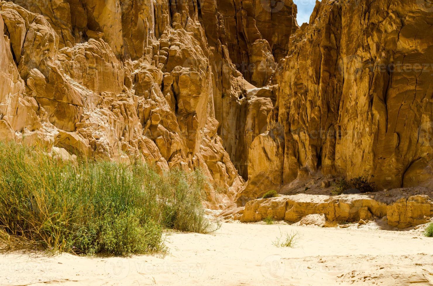 struiken in een woestijn canyon foto