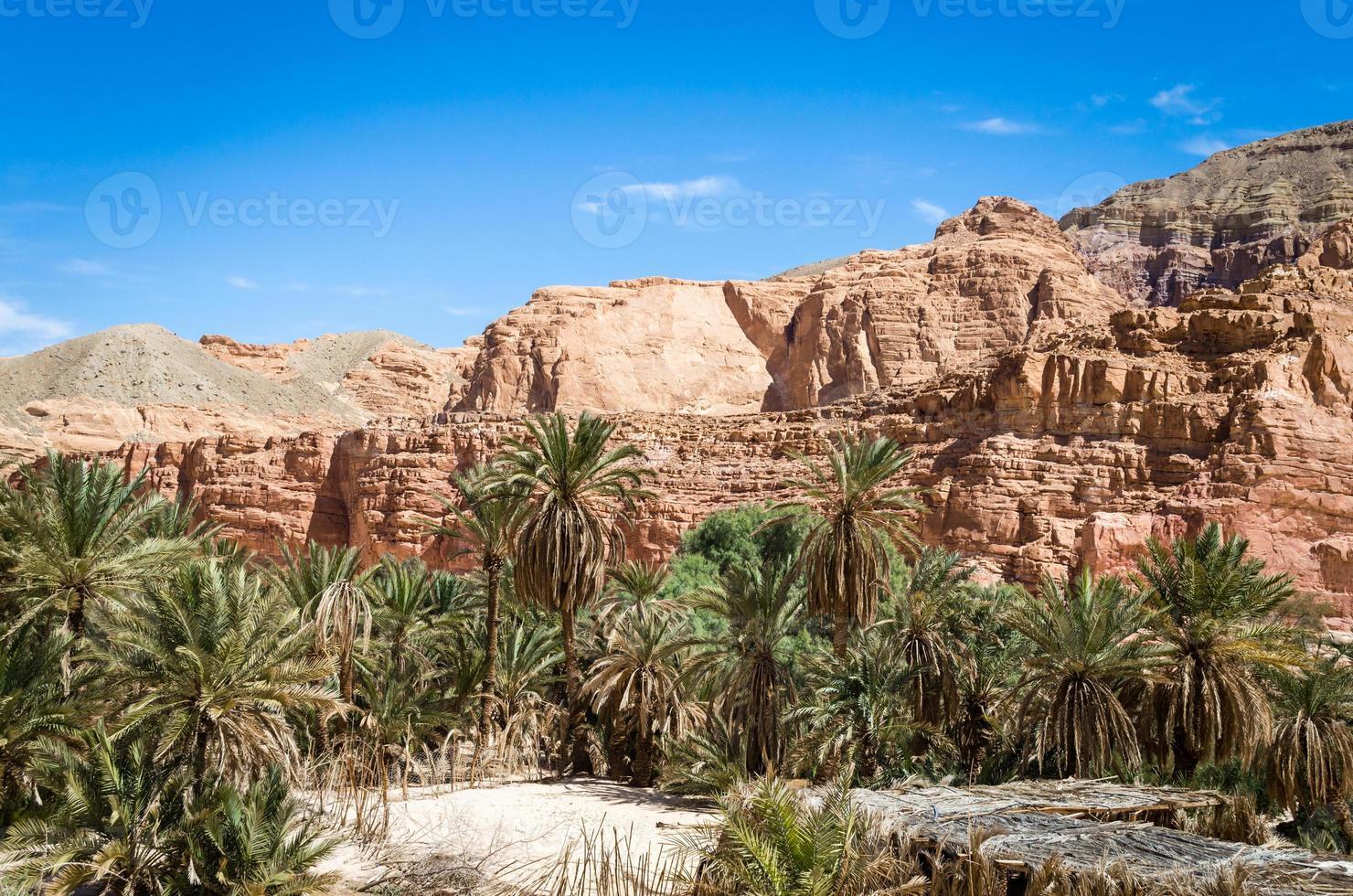 palmbomen en rotsen foto