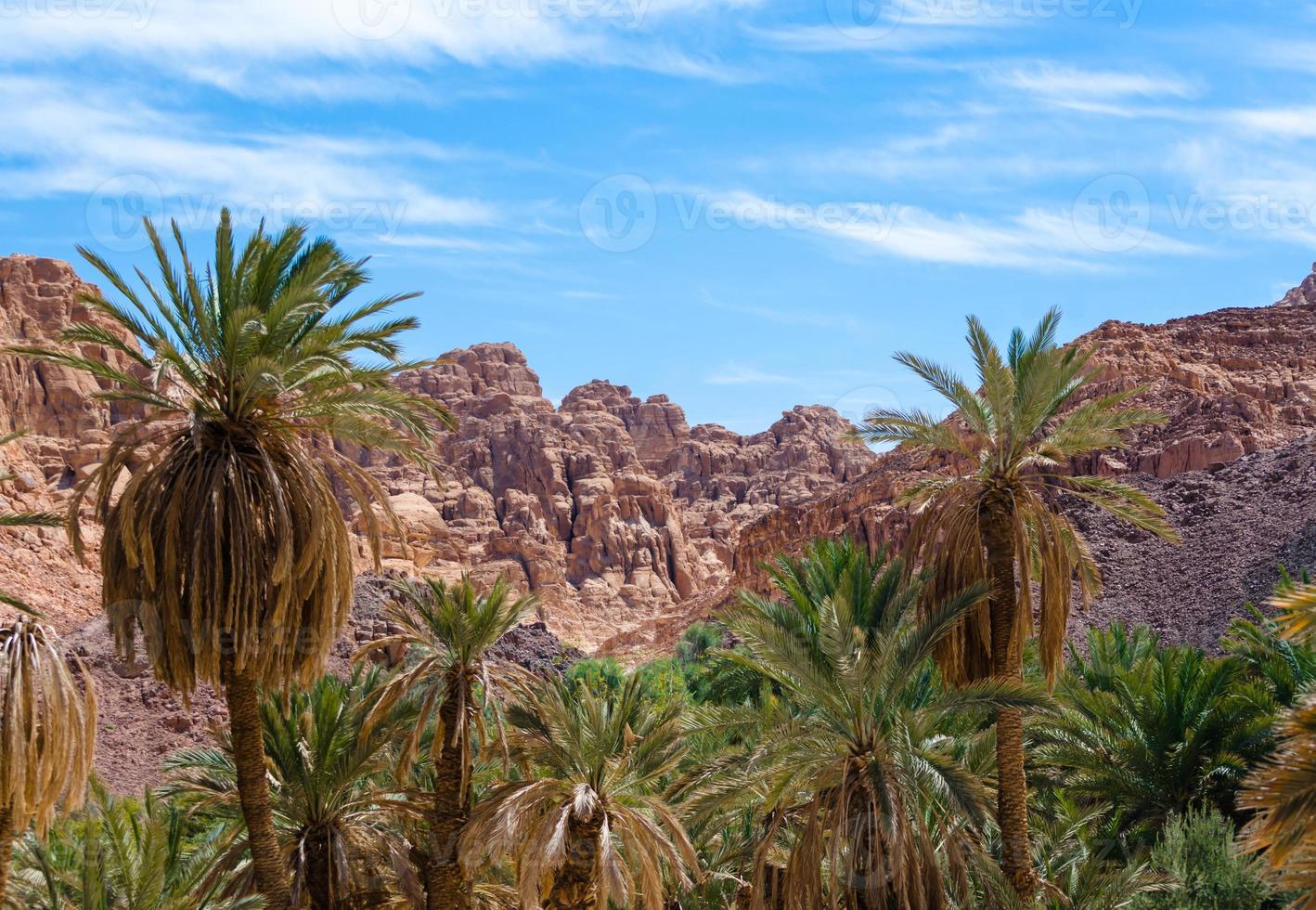 rotsachtige bergen en palmbomen foto
