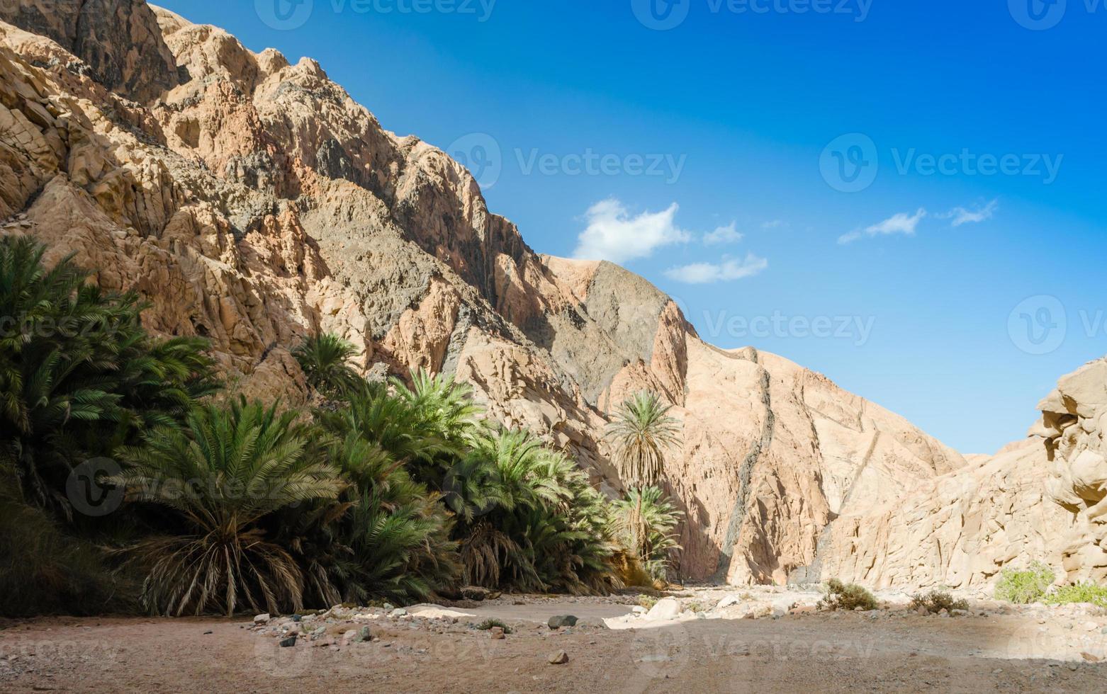 palmbomen en struiken langs de muur van een kloof foto