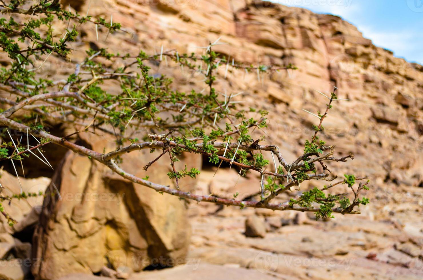 groene plant in de woestijn foto