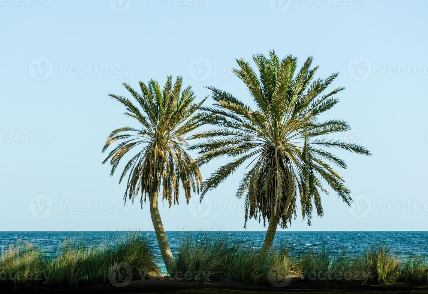 twee palmbomen foto