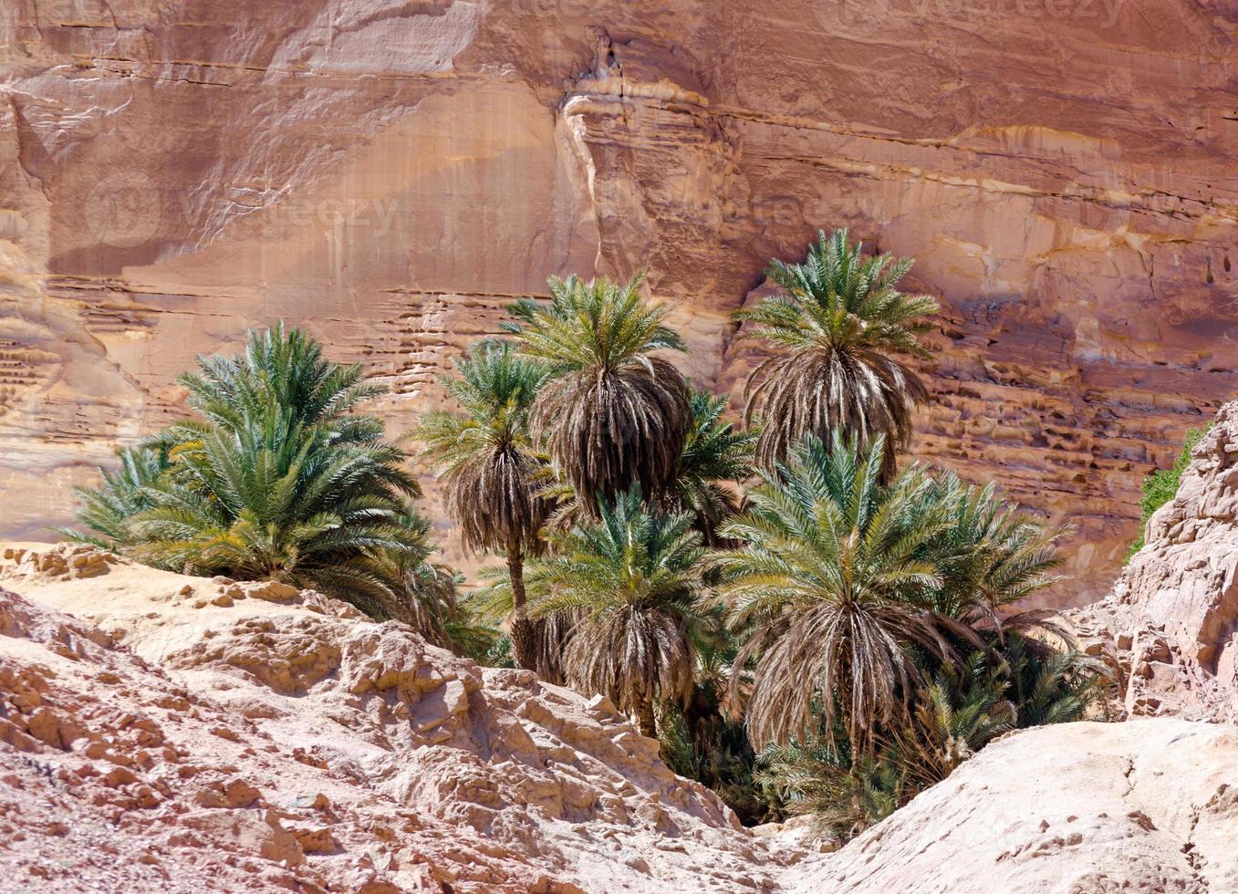 palmbomen in een rotsachtige woestijn foto