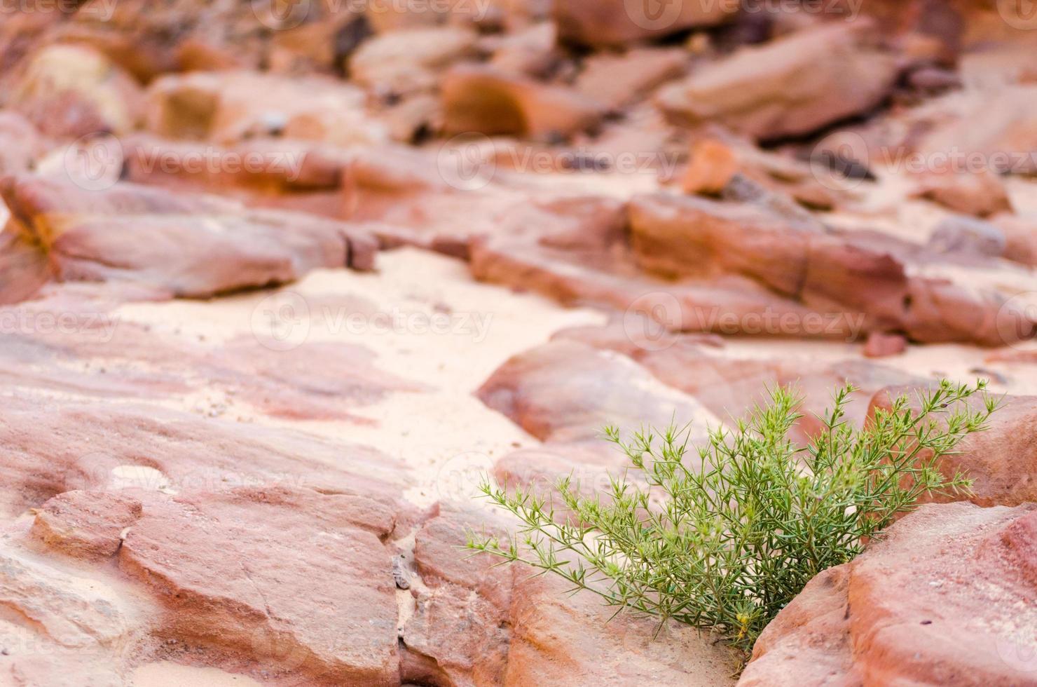groene struik en rotsen foto
