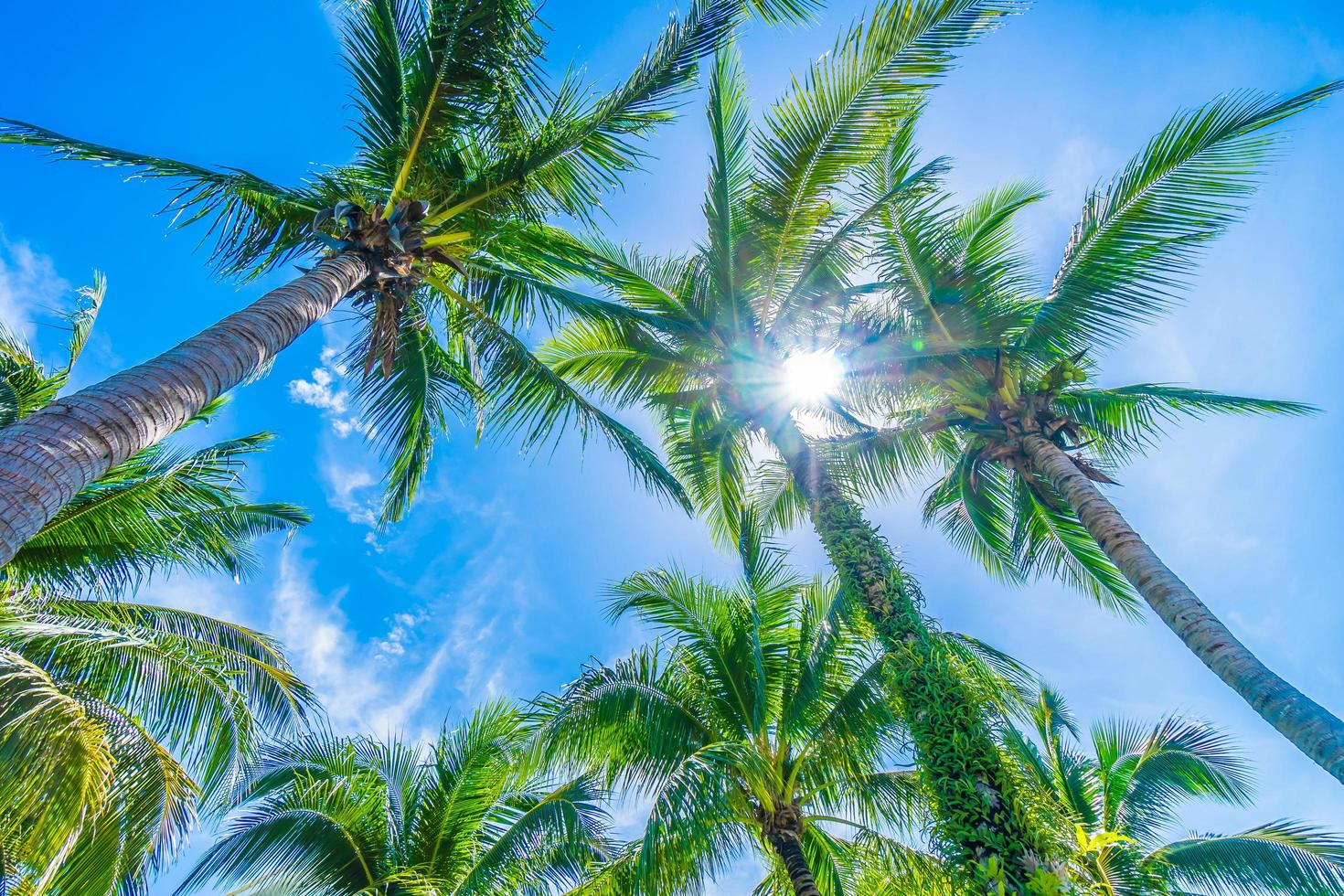 kokospalm op blauwe hemel foto