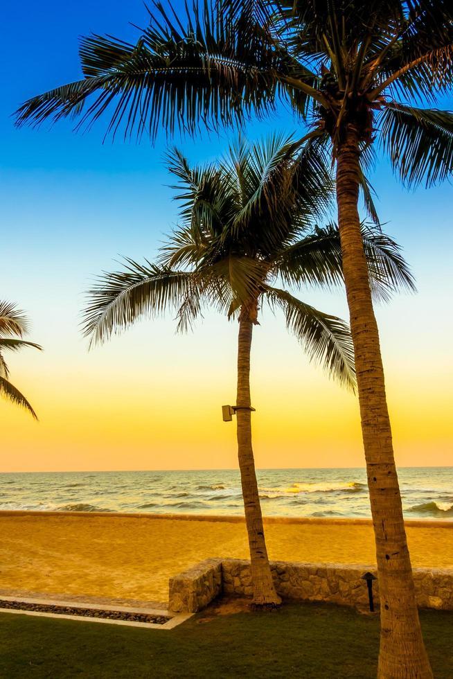 palmboom op het strand foto