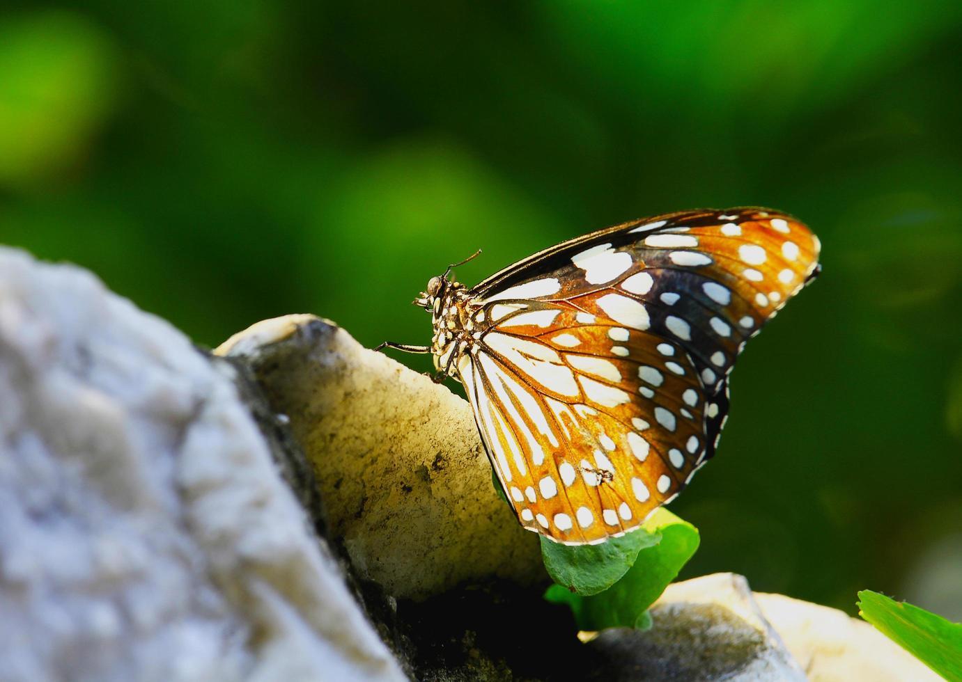 prachtige vlinder in de tuin foto