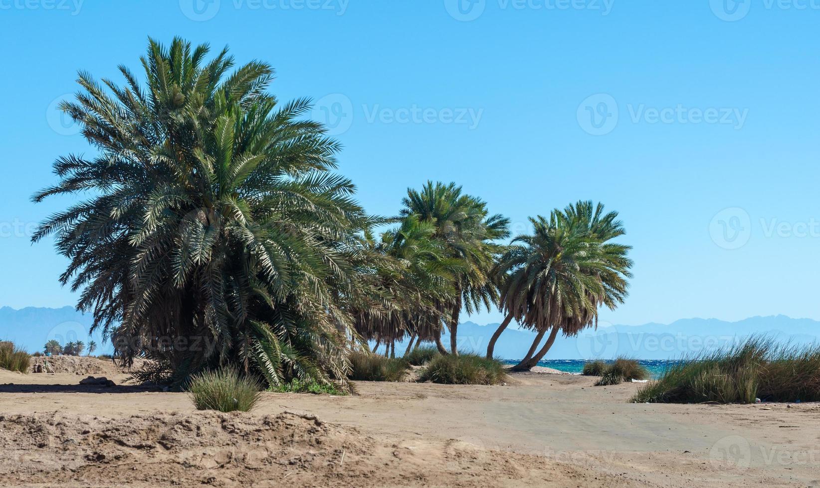 palmbomen op een strand foto