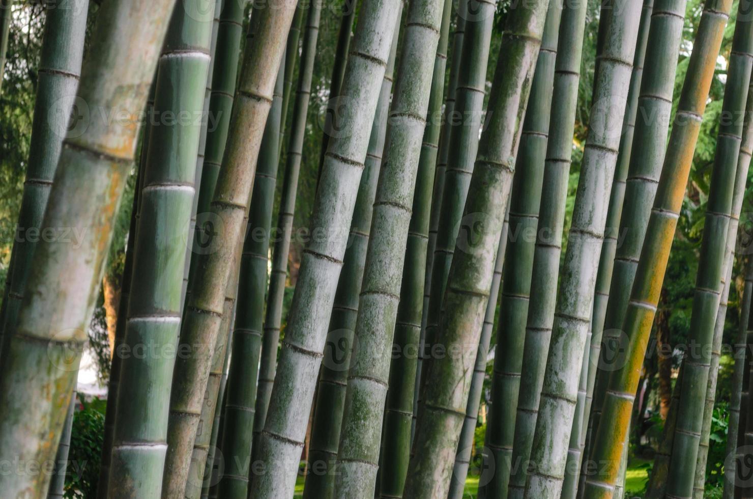 close-up van bamboe schors foto