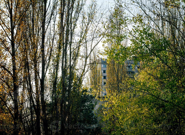 bouwen achter bomen foto