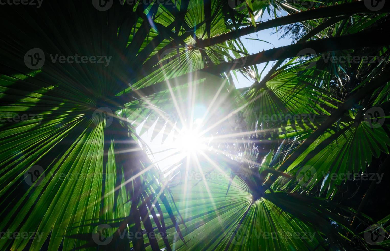 zonlicht door palmbladeren foto